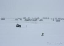 blizzard-bison01